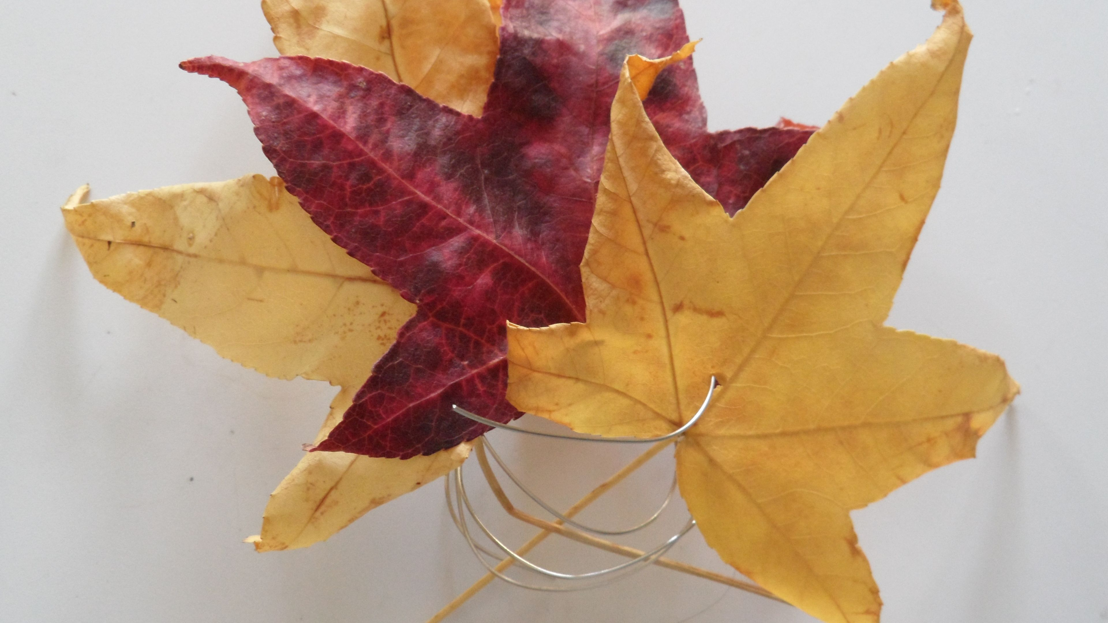 autumn leaves napkin ring urban life cycles
